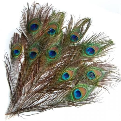 Ganpati Decoration Ideas 2017, Welcome Lord Ganesha In Style This Ganesh Chaturthi 2017 - Natural Beautiful Peacock Eye Feathers Tails 25 Piece In Full Length Amazon Deal